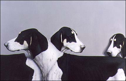 French black & white deer hounds - Oil on canvas by François Lebert